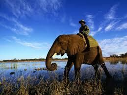 El Jinete y el Elefante (parte 1)