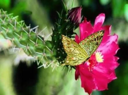 La Flor y Mi mariposa